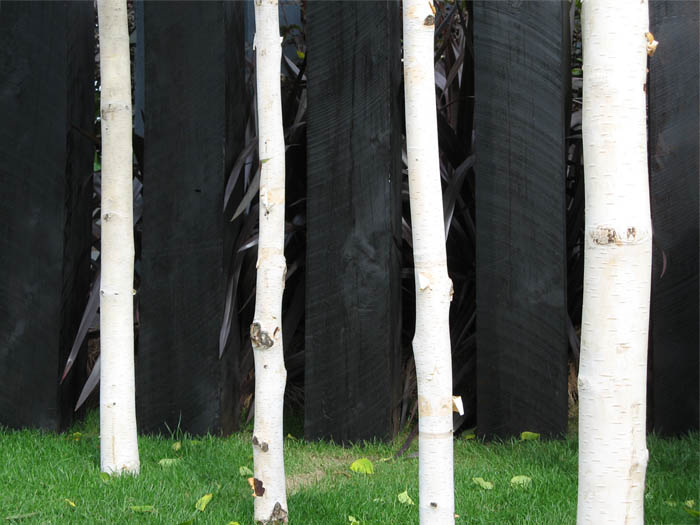 Photo of white tree trunks against black wooden posts