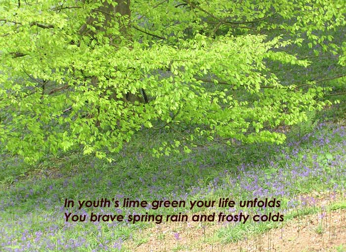 """In youth's lime green your life unfolds"" on the background of a tree in lime green flush of youthful leaves."
