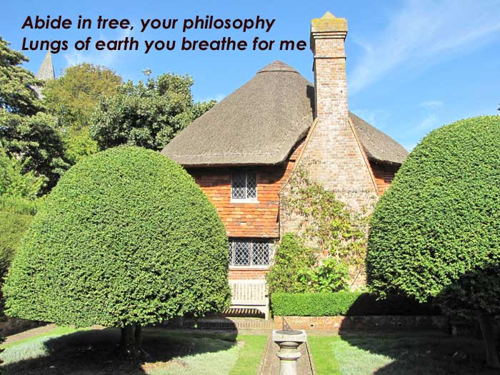 Abide in tree, your philosophy lungs of the earth you breathe for me on a photo of two rounded trees by a thatched house