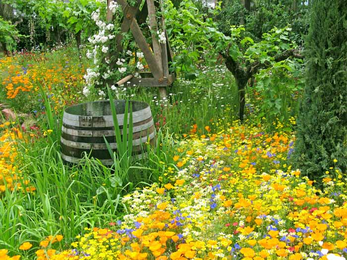 Mature vines stand majesticaly among a colourful Californian poppy meadow next to an old wind generated water pump and barrel.