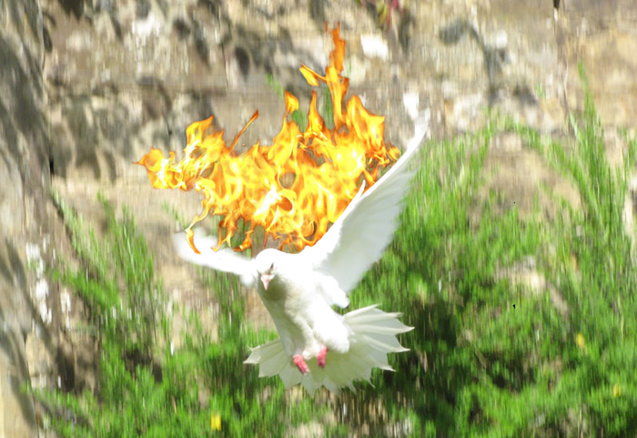 A white dove descending with flames on it's wings